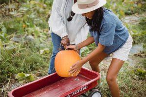 Petani Muda dan Digitalisasi Pertanian