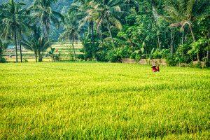 Indonesia's Future Food: Mengukur Permintaan Pangan Indonesia di Masa Depan